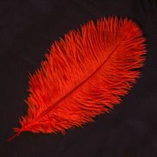 Stručio plunksna (35-40 cm), raudonos spalvos