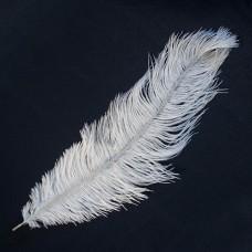 Stručio plunksna (35-40 cm), baltos spalvos