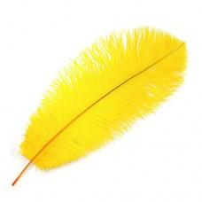 Stručio plunksna (40-45 cm), geltonos spalvos
